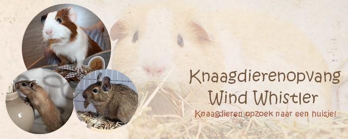 Knaagdierenopvang Wind Whistler